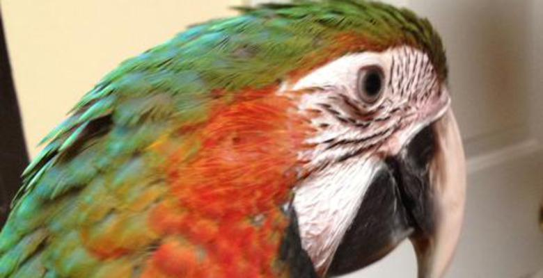 Cindy's Parrot Place | Exotic Birds and Parrots